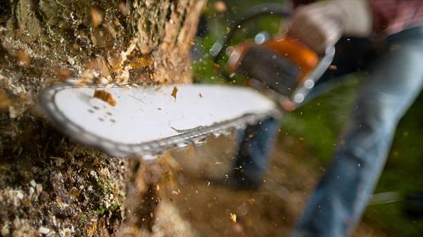 człowiek z piłą łańcuchową cięcia pnia drzewa - ciąć zdjęcia i obrazy z banku zdjęć
