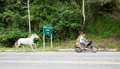 Santa Clara, Brazil - October 7, 2011: A man and a dog rides a motorcycle while towing a horse on a rope.