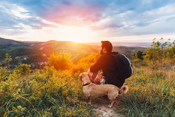 man with dog enjoying mountain sunset - forest animals stock photos and pictures