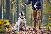 Man with dog in forest. Pet owner of labrador retriever enjoying from autumn.