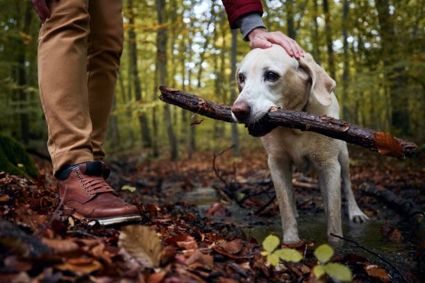 Man with dog in autumn forest stock photo