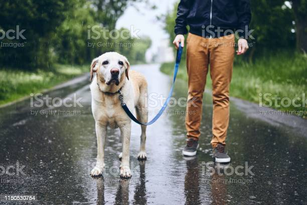 Man with dog in rain picture id1150530754?b=1&k=6&m=1150530754&s=612x612&h=pot2jq8z4c31ksp2af9fnefd68zbregoe4sk fu68fw=