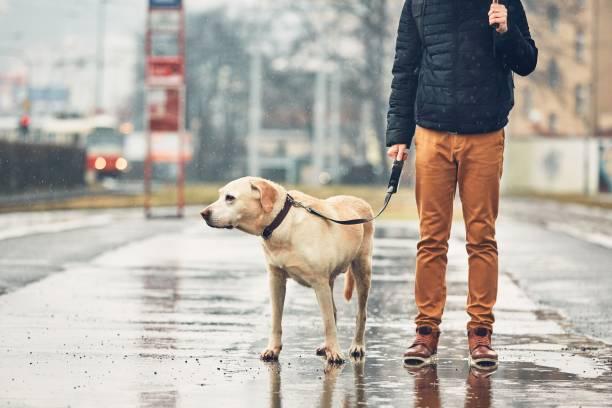 Man with dog in rain picture id934788362?b=1&k=6&m=934788362&s=612x612&w=0&h=ole2l0bvzuesbh 5aj0uwsmcbwkegj98twqdwzyoifa=