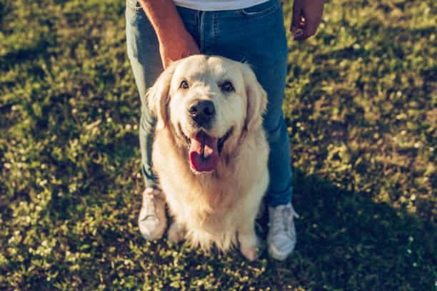 Man with dog picture id942596830?b=1&k=6&m=942596830&s=612x612&w=0&h=uhln5n2ujrdsubekmmv9 b7xdgqjlmzrh miqokgd1k=
