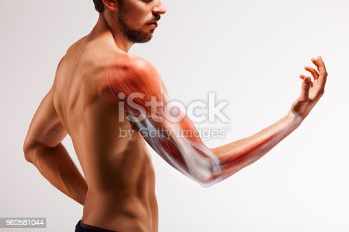 istock Man with extended arm. Illustrated representation of the structure and musculature of the human arm. 962581044