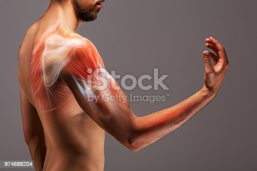 istock Man with extended arm. Illustrated representation of the structure and musculature of the human arm. 974688204