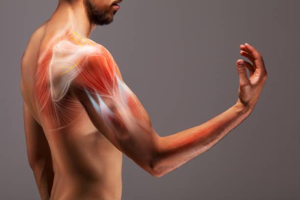 手臂伸展的人。人的胳膊的結構和肌組織的被說明的標記法。 - 人體部分 個照片及圖片檔