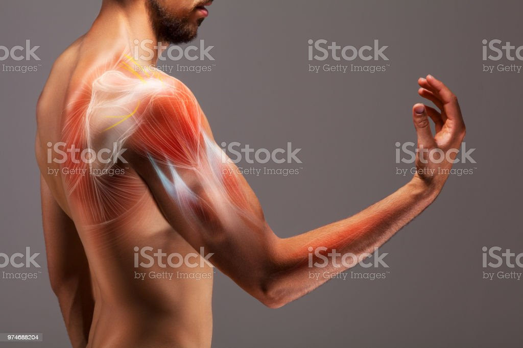 Man with extended arm. Illustrated representation of the structure and musculature of the human arm. stock photo