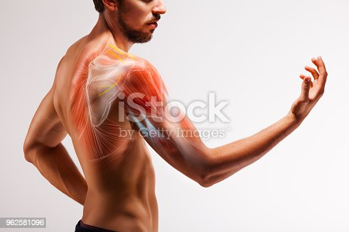 istock Man with extended arm. Illustrated representation of the tendon, scapula and nerves of the human arm. 962581096