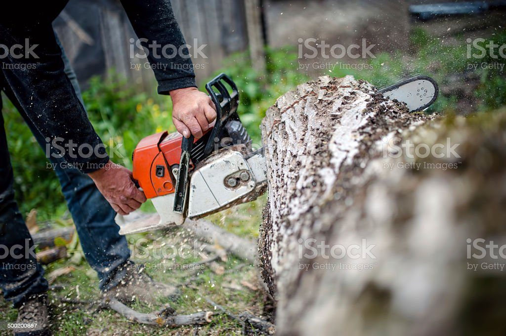 man with gasoline powered chainsaw cutting fire wood from trees stock photo