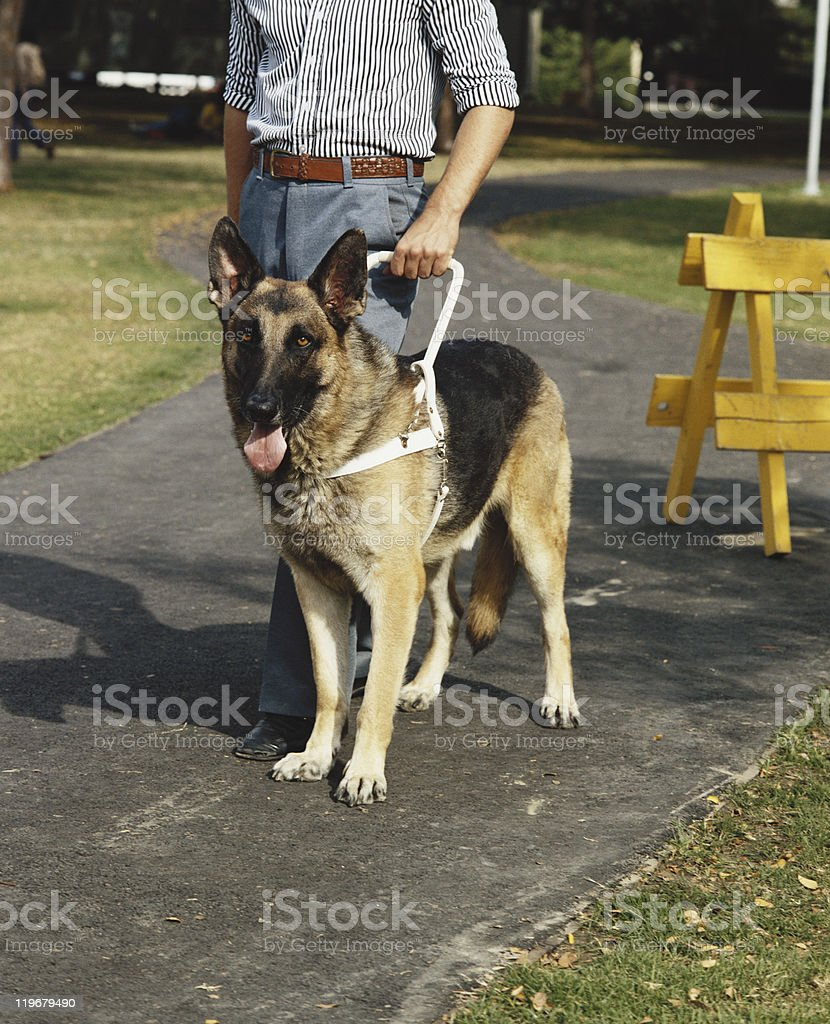 Man with guide dog stock photo