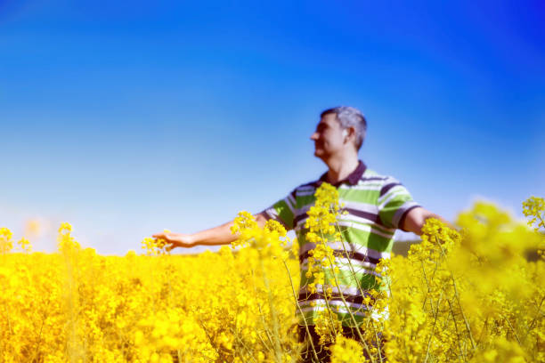 Man with hands wide open on sunny blue sky background.Man stands in golden canola field.Freedom concept.Rear view portrait of man with at standing at the canola fields with his hands wide open towards Man with hands wide open on sunny blue sky background.Man stands in golden canola field.Freedom concept.Rear view portrait of man with at standing at the canola fields with his hands wide open towards university of missouri columbia stock pictures, royalty-free photos & images