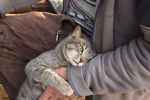 istock Man with his cat 512906198