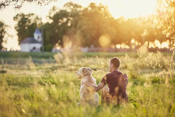 man med sin hund vid solnedgången - summer field bildbanksfoton och bilder
