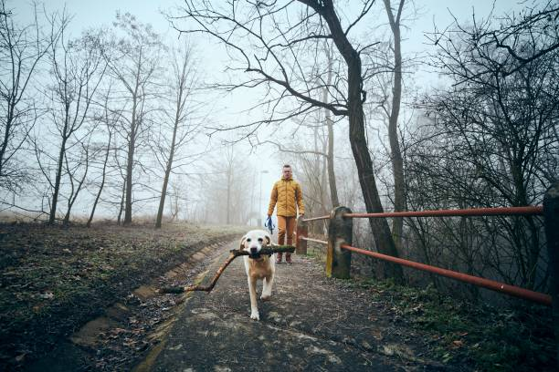 Man with his dog walking on sidewalk in fog stock photo