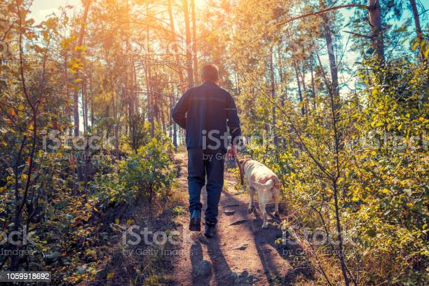 Man with labrador retriever dog walking in the forest in autumn picture id1059918692?b=1&k=6&m=1059918692&s=612x612&h=abtlmfm7ndimno5rufge0pq3hzasy5wsjlhzyek5b1e=