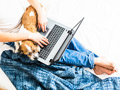 Pet, man, animal, bedroom, home office, computer, technology, surfing, working, blanket, white, barefoot, jeans