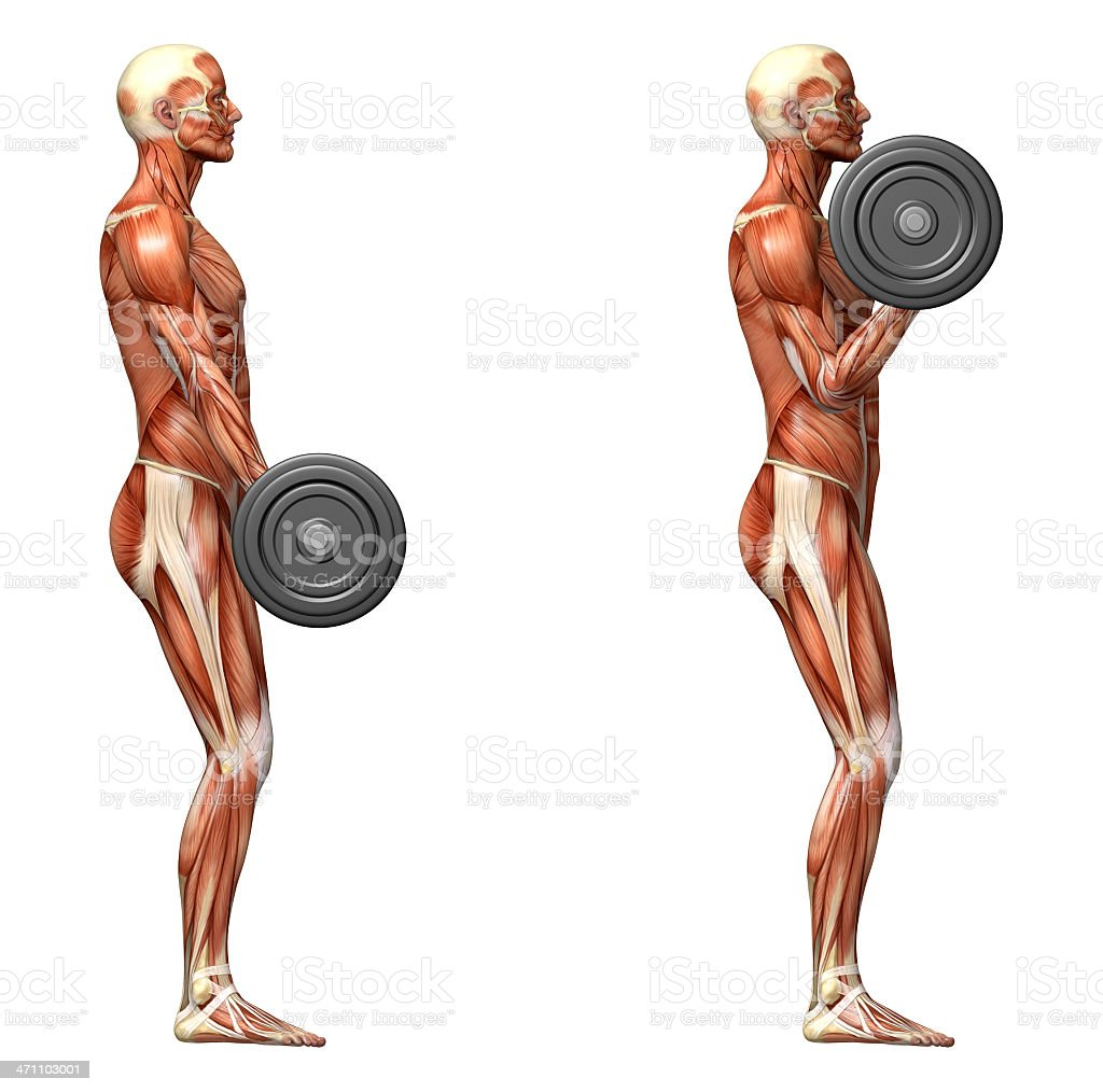 Man with muscular structure visible, performing barbell curl royalty-free stock photo