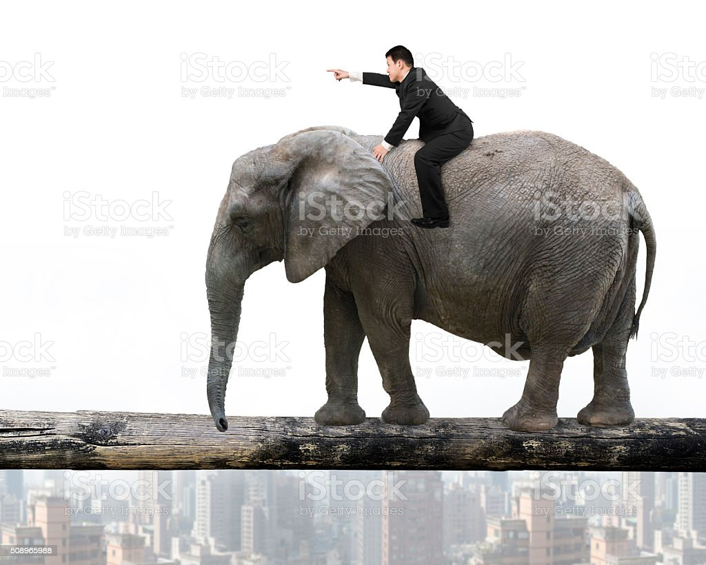 Man with pointing finger riding elephant walking on tree trunk stock photo