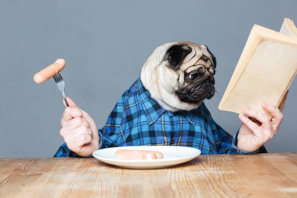 mann mit einem mops hund kopf essen würstchen und liest buch - humor bücher stock-fotos und bilder
