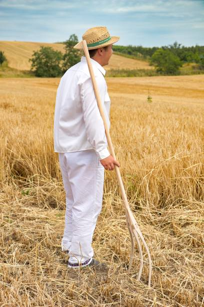 man with rakes in vintage clothes on the field stock photo