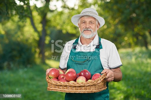 istock Man with showing harvest, holding basket full of red delicious apples. 1058803102