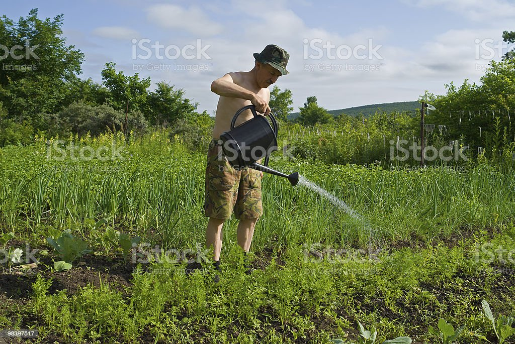 Man with sprinkling can royalty-free stock photo