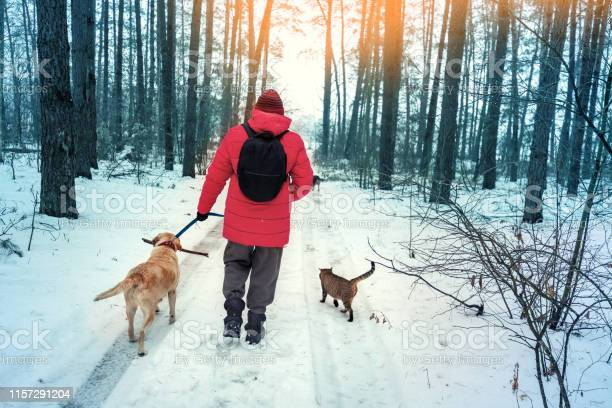 Man with two dogs and a cat walks in a snowy pine forest in winter picture id1157291204?b=1&k=6&m=1157291204&s=612x612&h=c5ia0 nyokpdvdtduzykqmu1 zmj8xudf2hgkitjvnw=