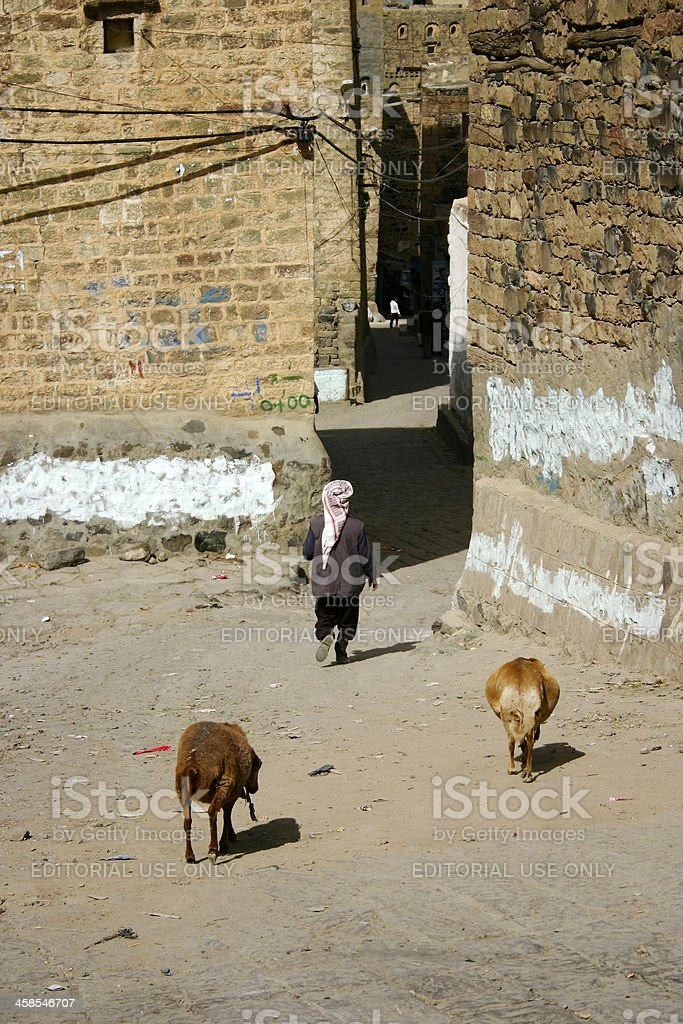 Man with two sheep royalty-free stock photo