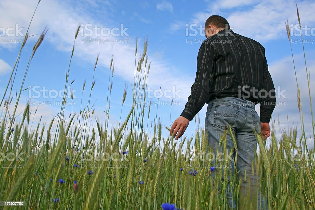Man with wheat royalty-free stock photo