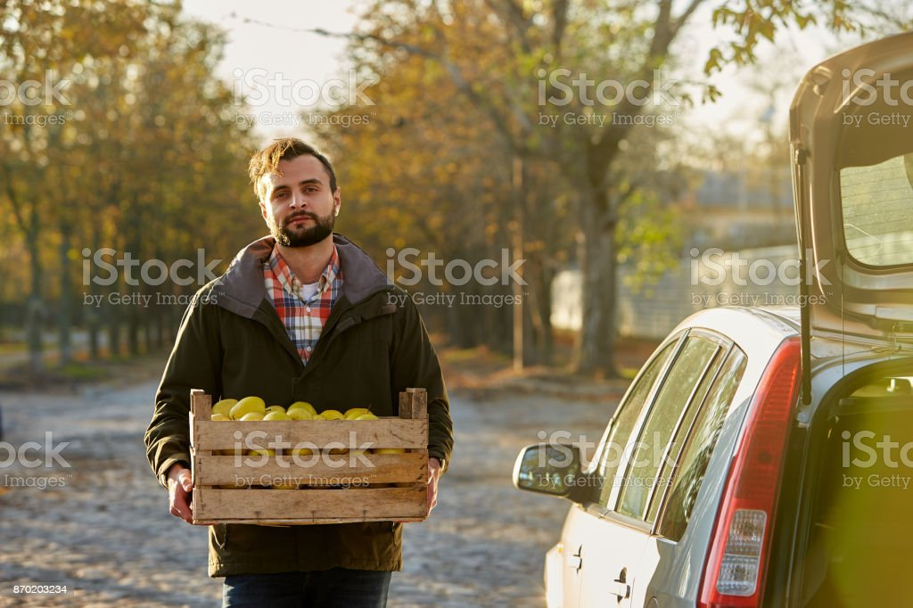 Man with wooden box of yellow ripe golden apples at the orchard farm loads it to his car trunk. Grower harvesting in the garden is holding organic apple crate. Harvest Concept. Housewifely male bought fruits stock photo