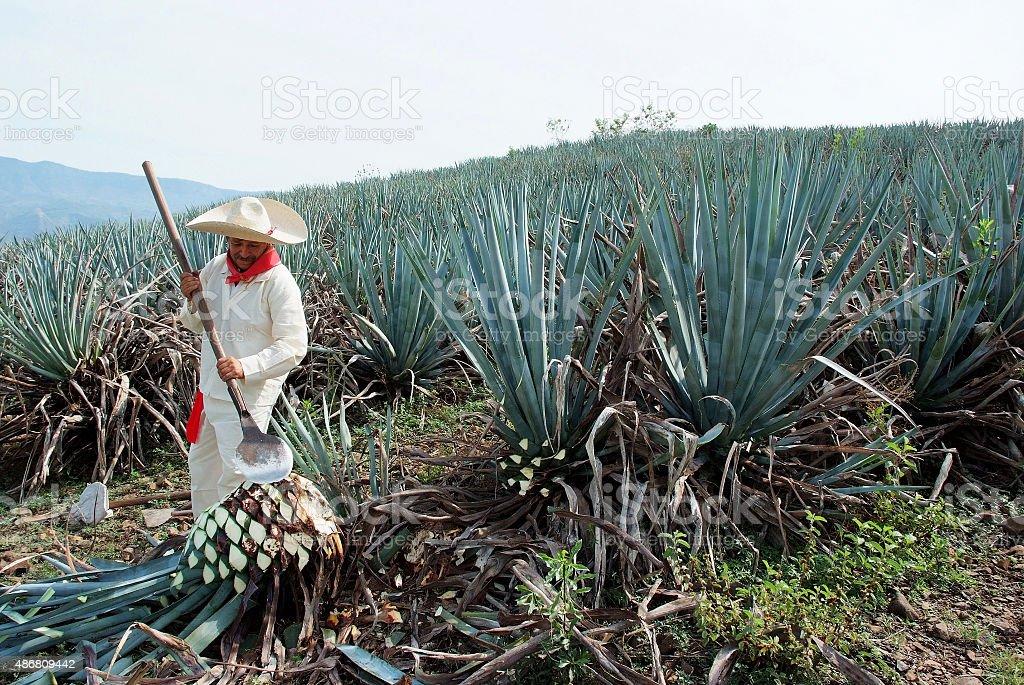 Mann Arbeiten im tequila-Branche – Foto