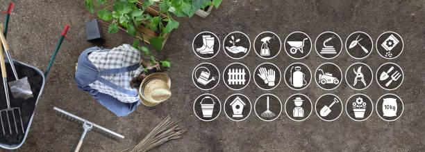 der mensch arbeitet im gemüsegarten eine pflanze in den boden, ikonen und symbole der gartengeräte, top-ansicht - besteck günstig stock-fotos und bilder