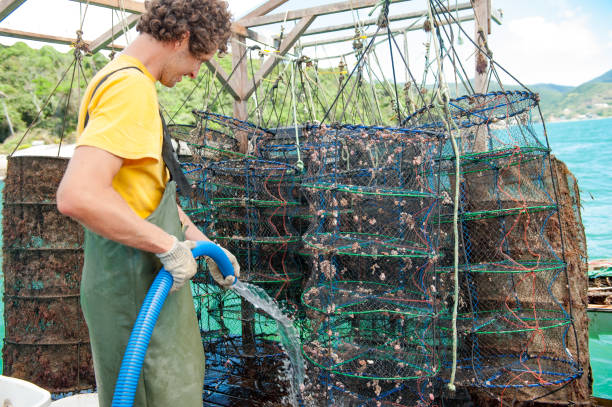 menschen arbeiten und analysieren die produktion von jakobsmuscheln - weichtiere stock-fotos und bilder