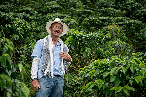 Man working at a coffee farm stock photo