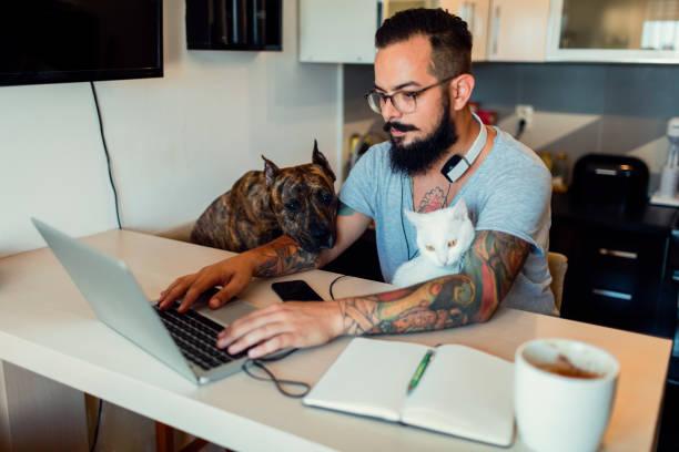 Man working at home with his dog and cat next to him picture id815784156?b=1&k=6&m=815784156&s=612x612&w=0&h=zmoxera cxfkz1jjb29ptpx2iy7sc7dozfpftmr 0xa=