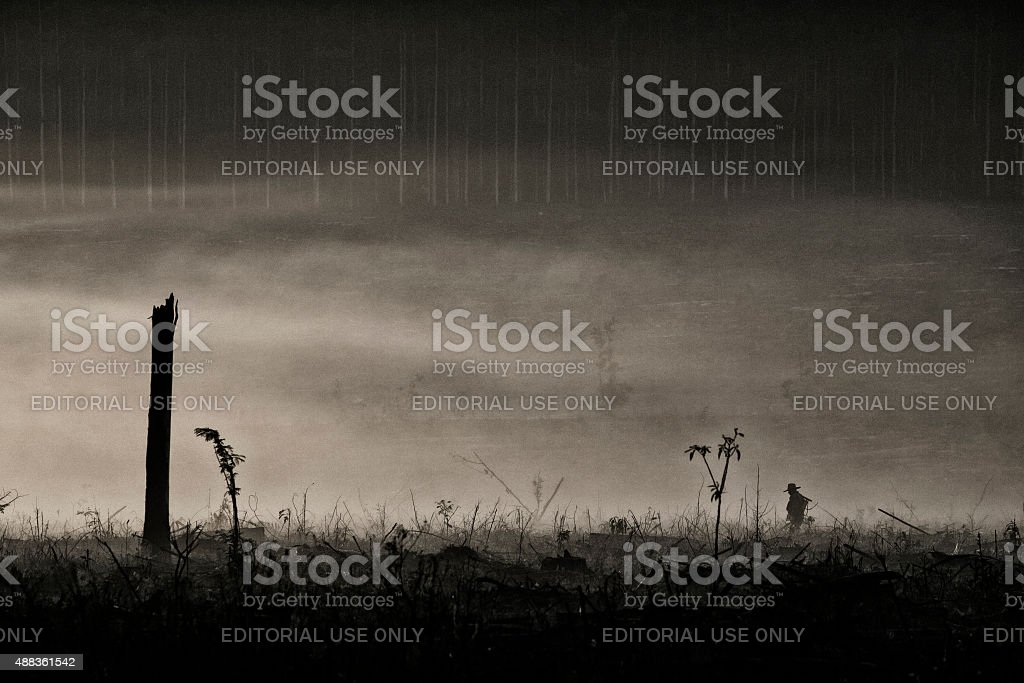 man working in a deforestation stock photo