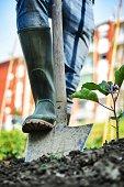istock Man working in a Urban City Vegetables Garden 477434398