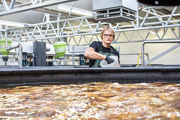 man working in fish farm - aquaculture stock pictures, royalty-free photos & images