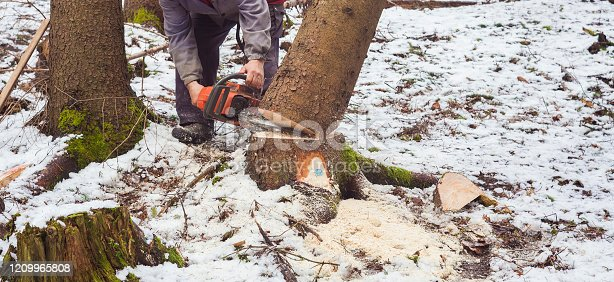 man working in forest for cutting tree. deforestation in winter