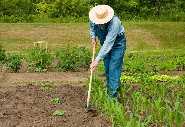 man working in his garden stock photo