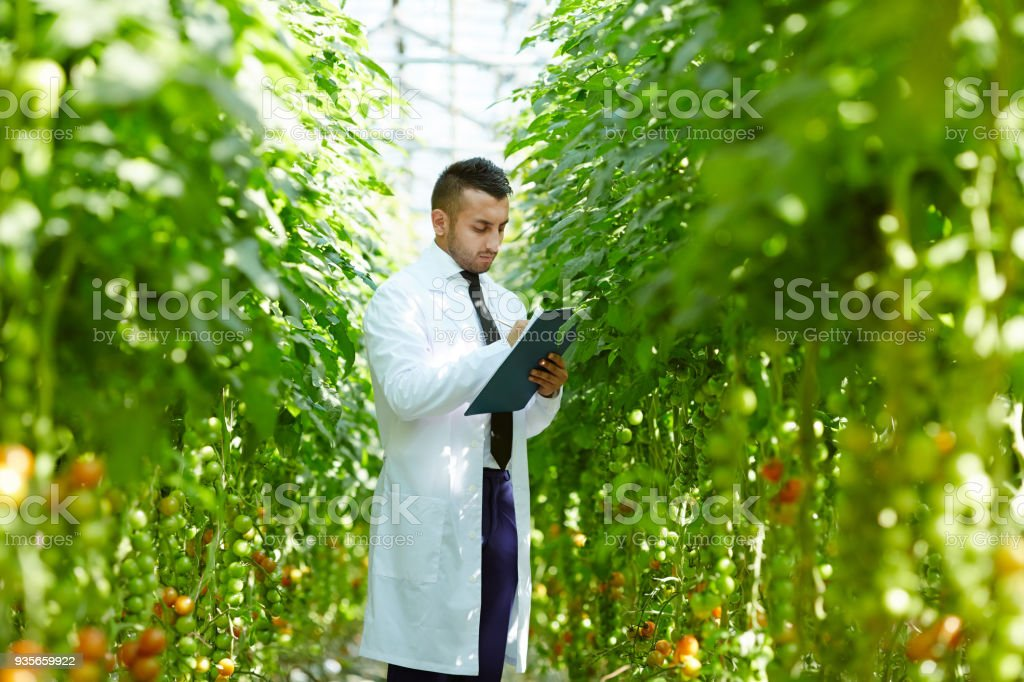 Man working in hothouse stock photo