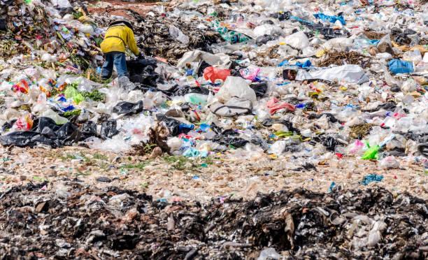 buengkhan province, thailand-13 januari: man die werkzaam zijn in de gemeentelijke afvalverwijdering open dump proces.  dump site op buengkhan province op 13 januari 2016 in buengkhan provincie thailand - aas eten stockfoto's en -beelden