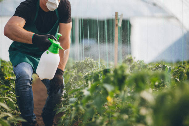Man working in the garden Farmer spraying plants in greenhouse herbicide stock pictures, royalty-free photos & images