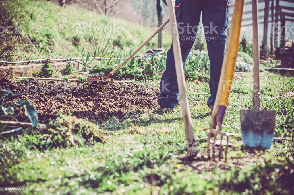 Man Working In The Vegetable Garden Using Garden Tools Stock Photo