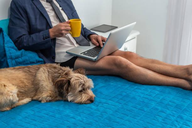 hombre trabajando en su cama con su computadora portátil al lado de su perro - zoom meeting fotografías e imágenes de stock