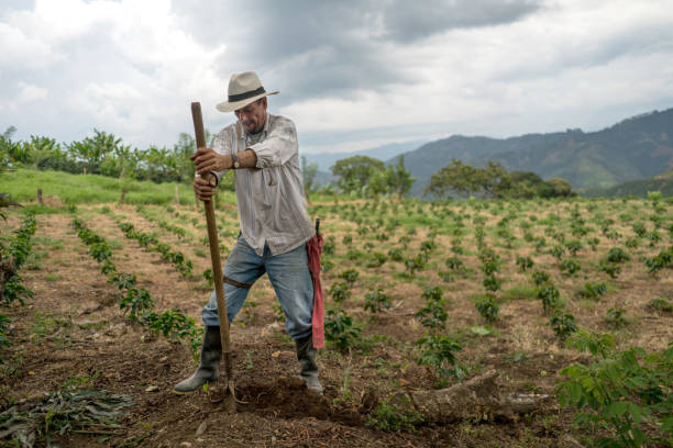 man working the land at a farm – agriculture concepts - coffee farmer foto e immagini stock