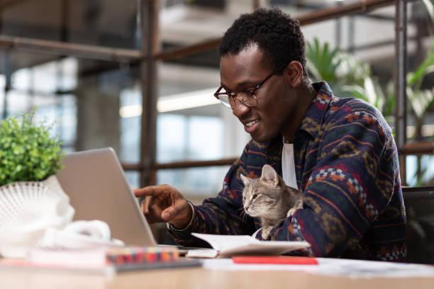 Mann arbeitet mit seiner grauen Katze zusammen – Foto