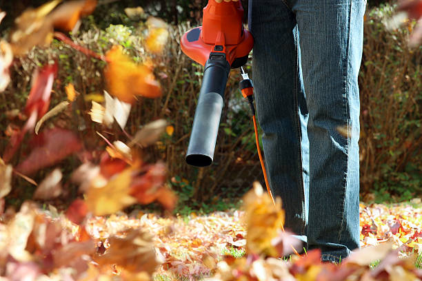 Man working with leaf blower: the leaves are being – Foto
