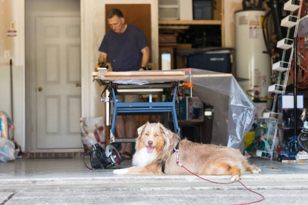 Man works in background, faithful dog lies on the floor While the mature adult man works in the background, his faithful dog cools off on the cement floor of the garage. Dog proofing your garage.
